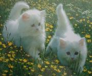 Uk And Vet Check Persian Kittens