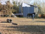 Grooming etc. horses