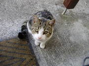 cat free to good loving home,   aprox 2 years,  house trained and spayed