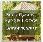 Bandhavgarh National Park,  Wild Life Tour Packages